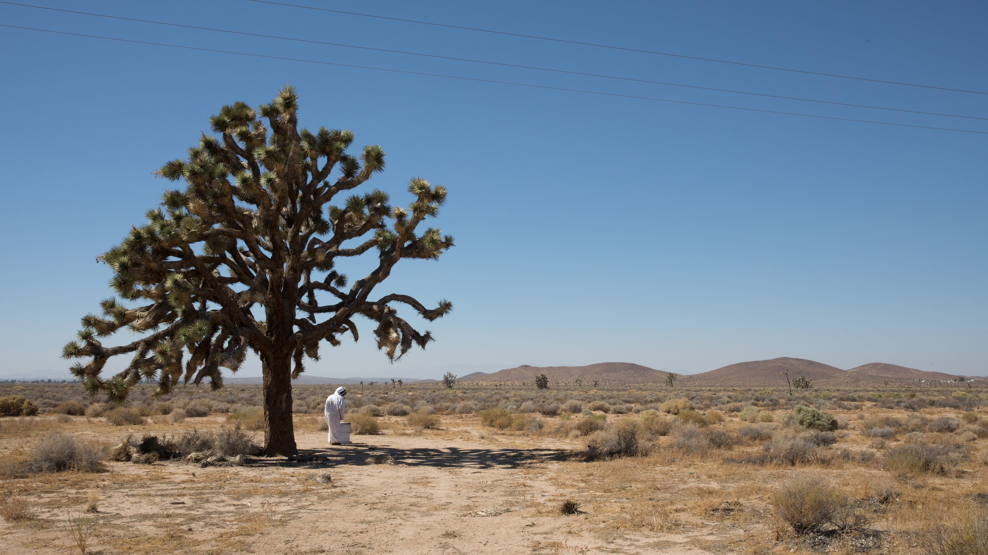 Tree in the Mojave Desert near Boron