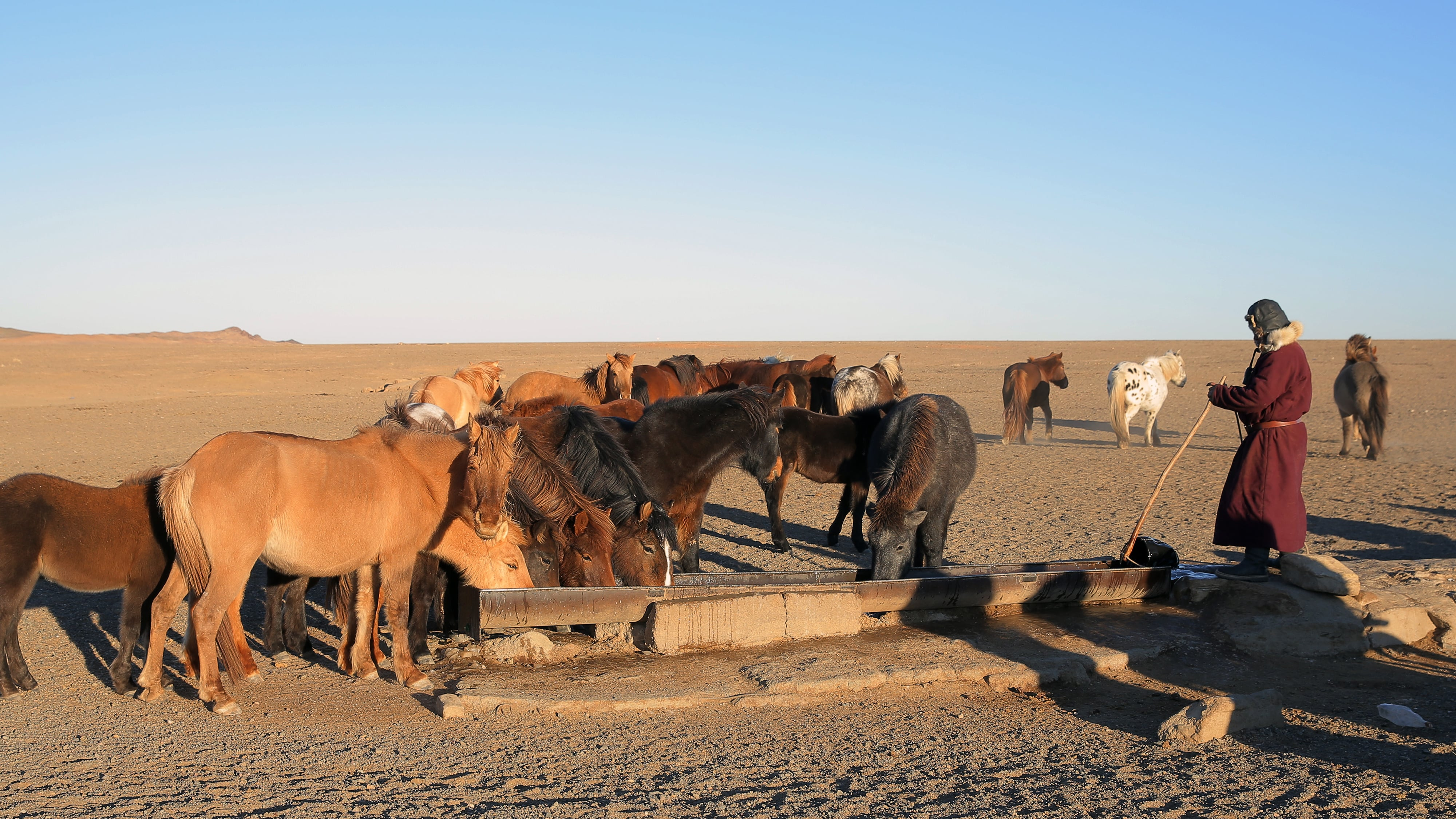 Herders rely on shallow groundwater springs and wells for their animals